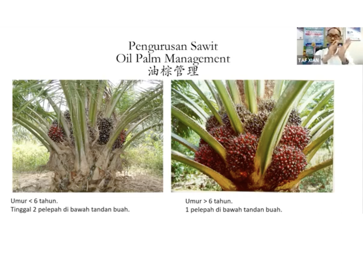 Online Seminar Topic : Golden Crop Management – Oil Palm Plantation